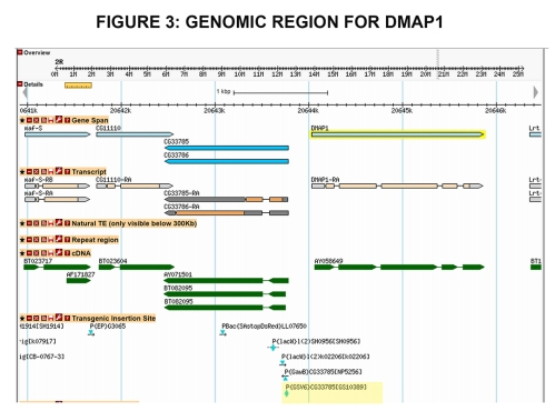 Genomic region for DMAP1