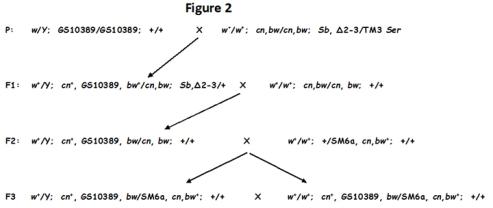 Cross scheme