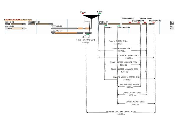 DMAP1 primer map