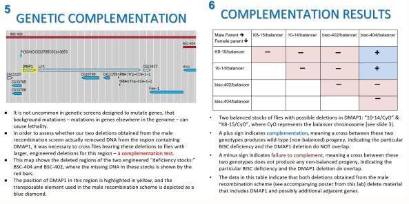 complementation-slides