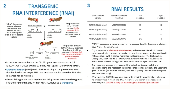 transgenic-rnai-slides